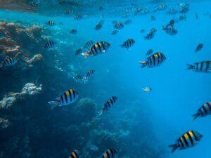Peces en la Riviera Maya